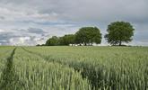 Lutter contre le mitage pour préserver l'agriculture, les paysages et le cadre de vie des Franciliens