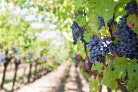Conseil de bin viticole